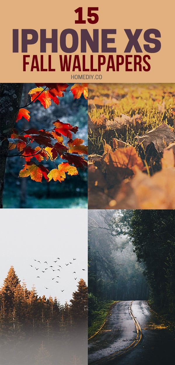 15 Fall Iphone Xs Wallpapers Best Autumn Backgrounds