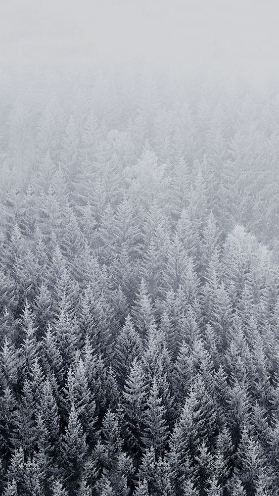 Winter iPhone Wallpaper Ideas – Winter Backgrounds for iPhone [Free Download]. Searching for a winter iPhone wallpaper ideas for the best mood? I picked for you the best winter backgrounds in great resolution - don't hesitate to save to your iPhone Wallpapers board on Pinterest and download them all! #iphone #iphonewallpaper #wallpaper #background #samsung #galaxy #winter #christmas