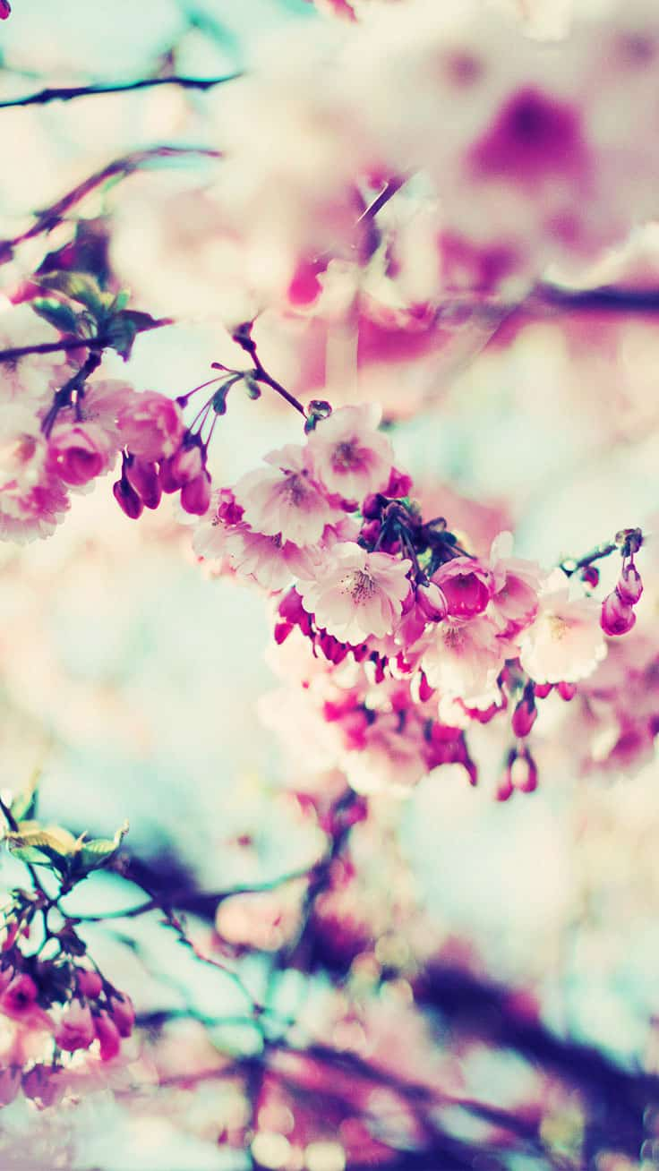 Spring Wallpapers for iPhone – Best Spring Backgrounds [Free Download]. Who doesn't love spring? That's the season of tender blooming and rebirth of nature, fresh air and big dreams! Looking for great spring wallpapers for iPhone? Feel free to download all these spring backgrounds! #wallpaper #background #iphone #iphonewallpaper #spring