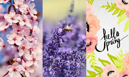 Spring Wallpapers for iPhone – Best Spring Backgrounds [Free Download]
